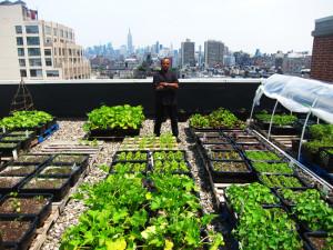 stresne zahrady K2projekt